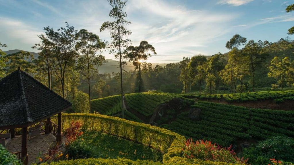 Ceylon Tea Trails.