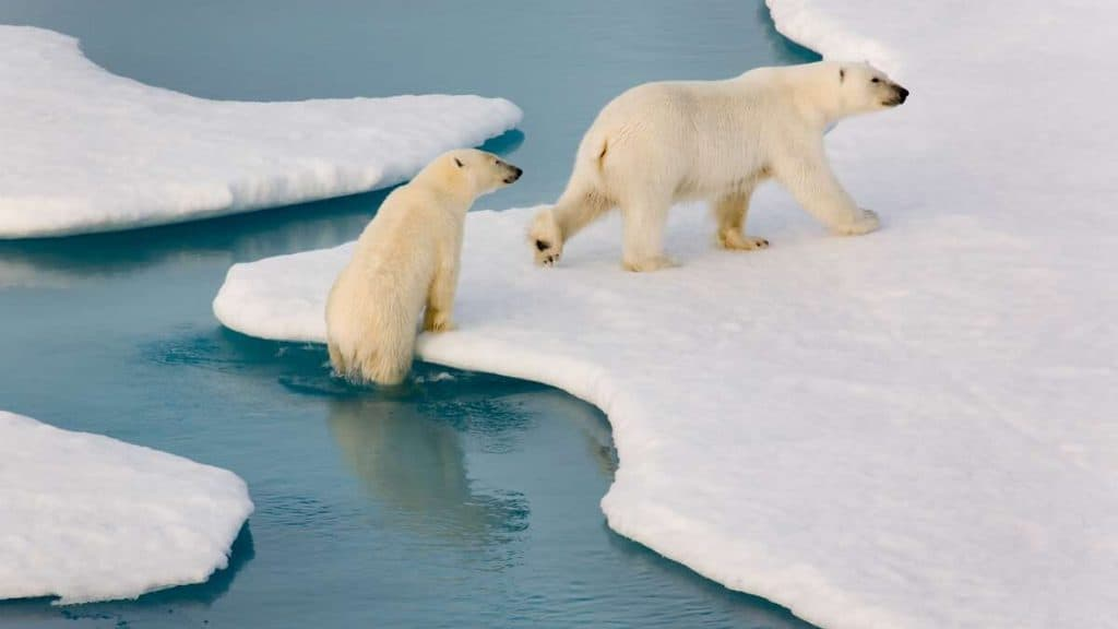 Tett på dyreliv i Arktis.