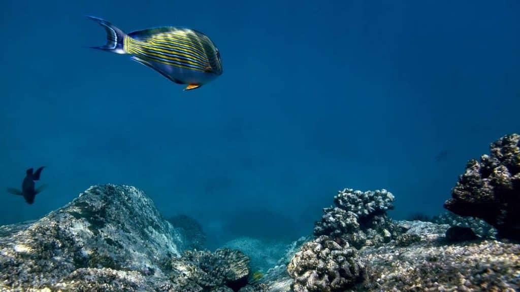 Opplev de vakre korallrevene utenfor øya.