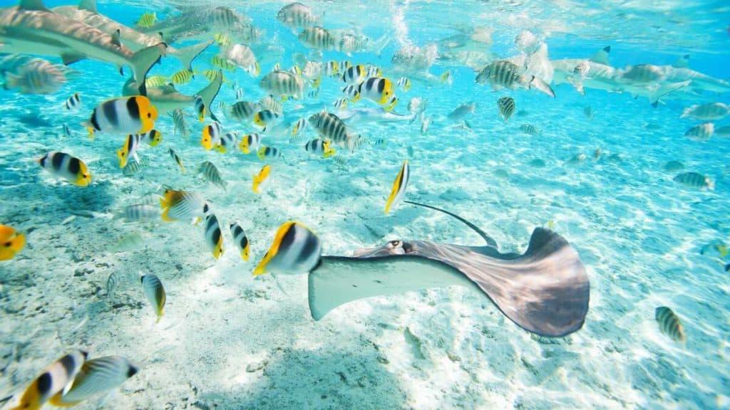 Utforsk livet under vann på Bora Bora.