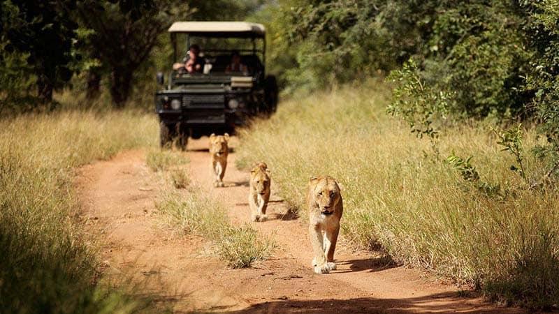 Jabulani Safari