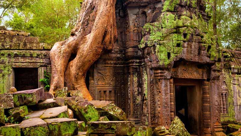 Ta Prohm temple, Angkor Wat.